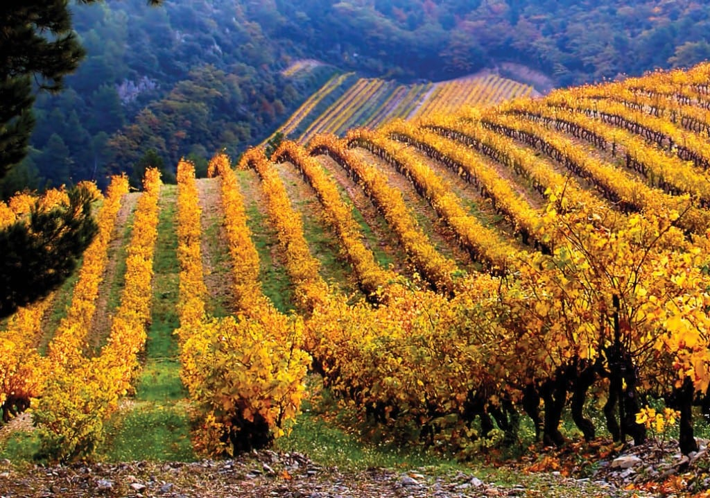 Fall For These Wines